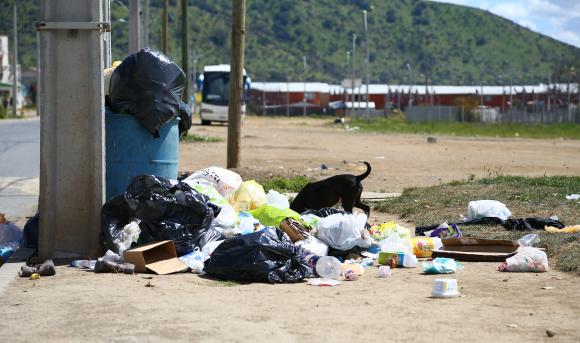 dog rummages through garbage pile